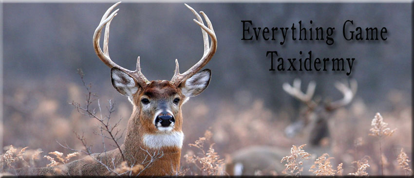 Price List | Everything Game Taxidermy